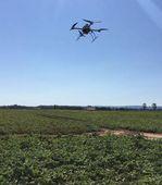 Entwicklung eines bildbasierten Überwachungssystems großer Kartoffelanbauflächen mit intelligenter Entscheidungslogik für eine rechtzeitige Diagnose der Phytophthora infestans