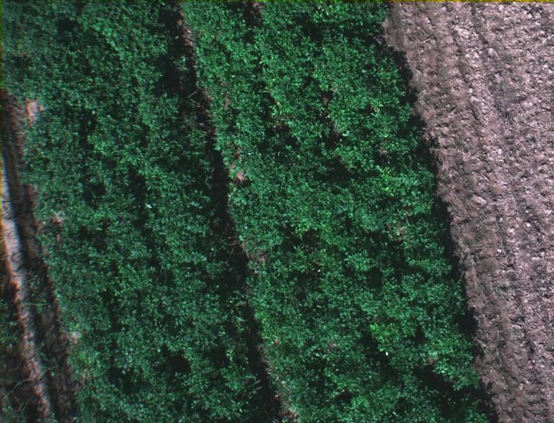 Beispielbild Versuchsfeld aus Drohnensicht, Farbbild auf Basis der RGB ähnlichen Spektralbilder.