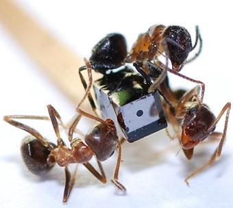 Miniaturkamera und Ameisen